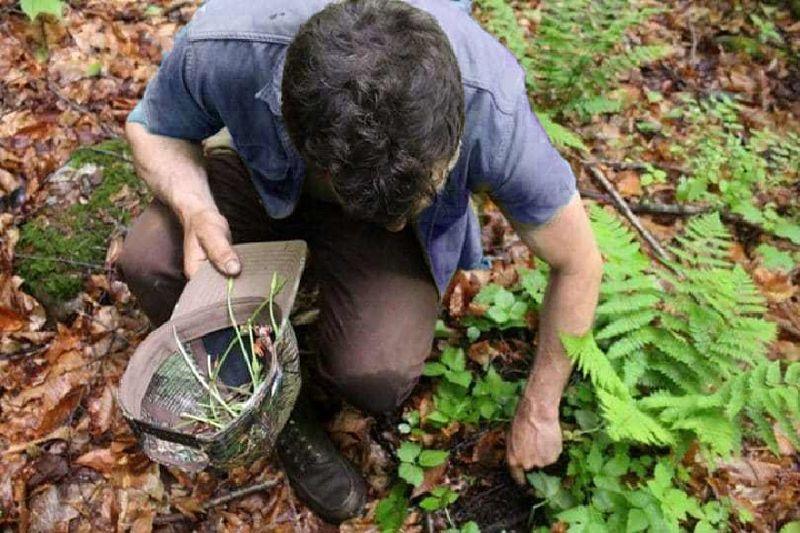 mitos de sobrevivência na selva